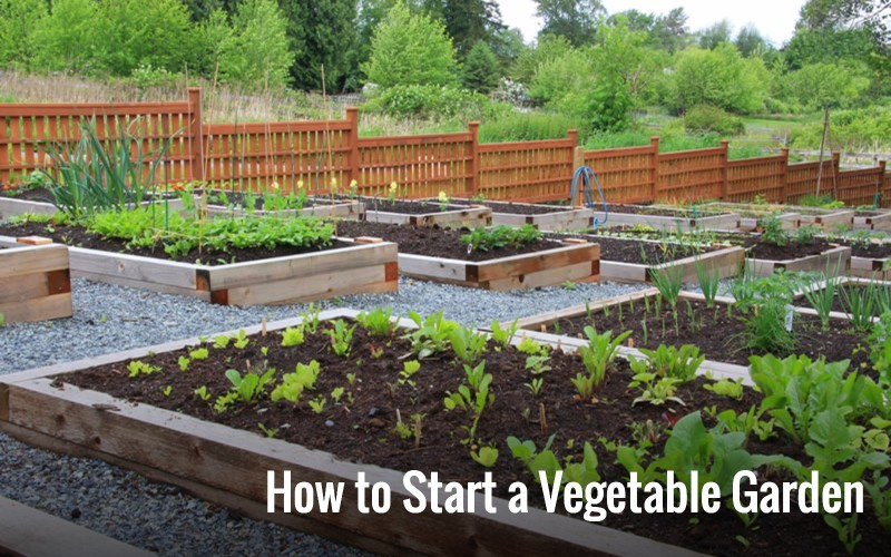 how to start a vegetable garden home grow your own veggies  yard day, Natural flower
