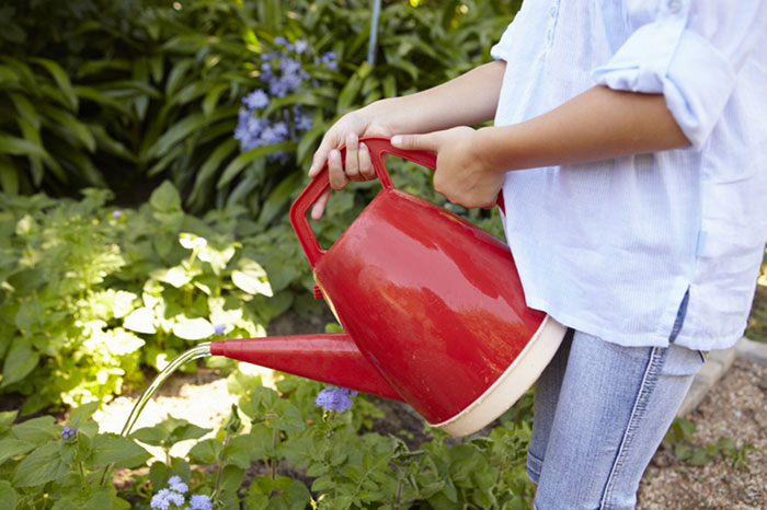 Watering in your Vegetable Garden