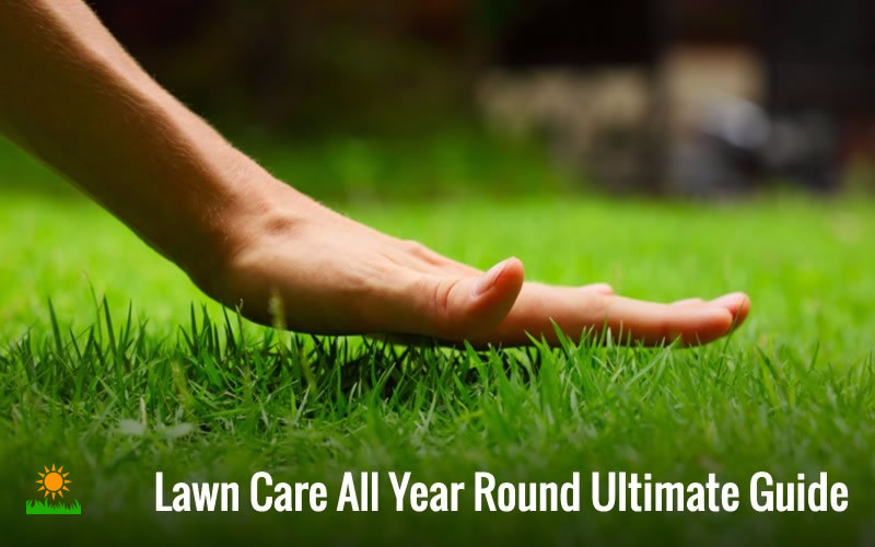 Lawn Care All Year Round Ultimate Guide