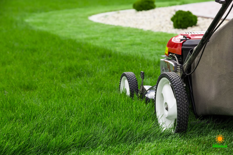Lawn Mowers to Make Your Life Easier