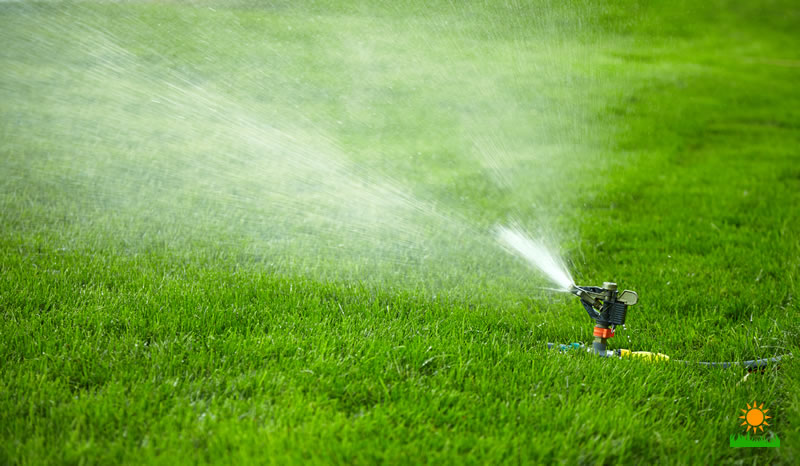 Summer Lawn Care Guide
