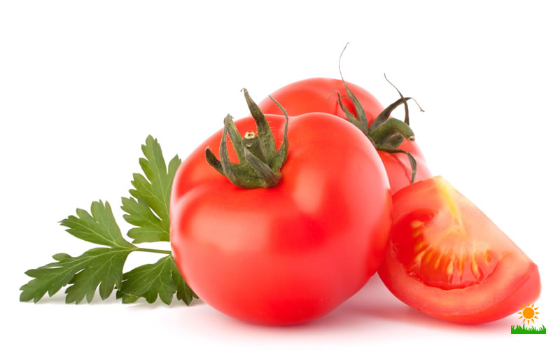 Eating and Growing the Best Tomatoes