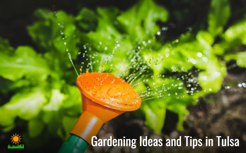 gardening ideas in Tulsa