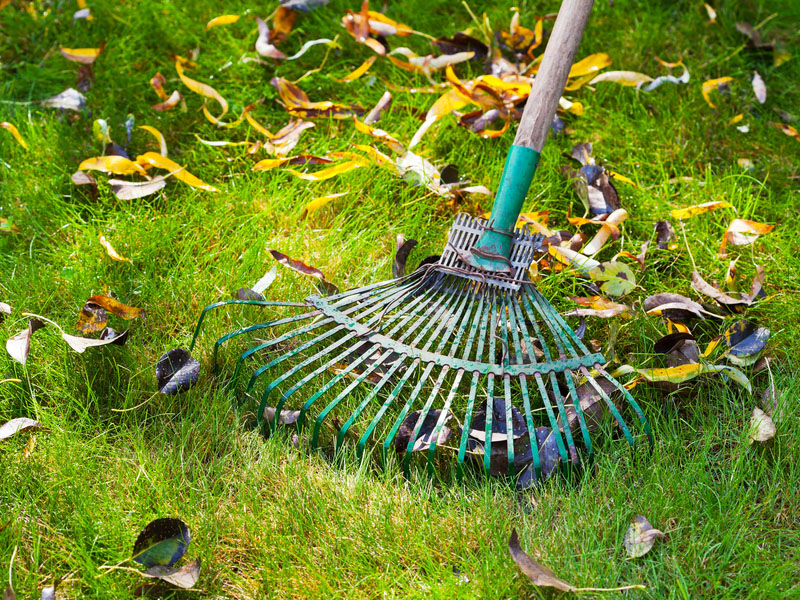 Fall Lawn Care Tips for You