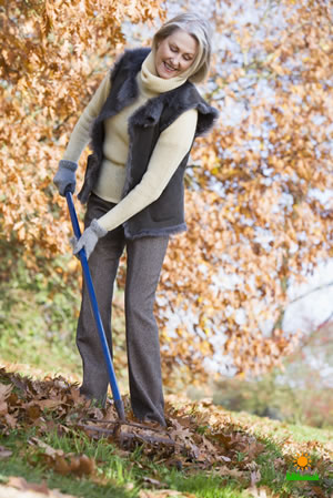 Rake Leaves for Fall Lawn Care
