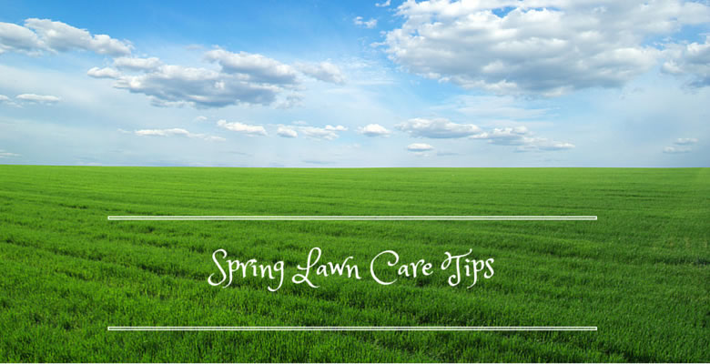 spring lawn care and maintenance tips