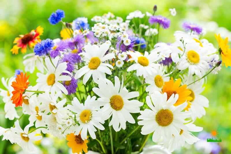 Easy Flower Ideas for Summer